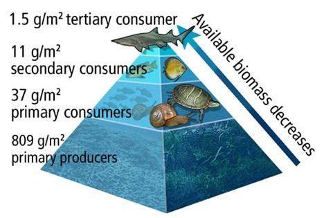 622_Bc10fig26b-food-pyramid-2_tm_r-lowres