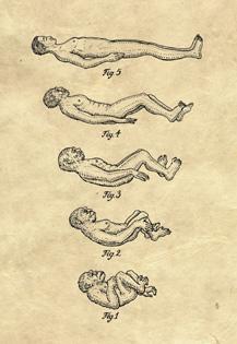 the evolution of sleep,fina