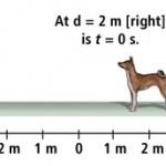 615_9-21_f_dog-TM-3