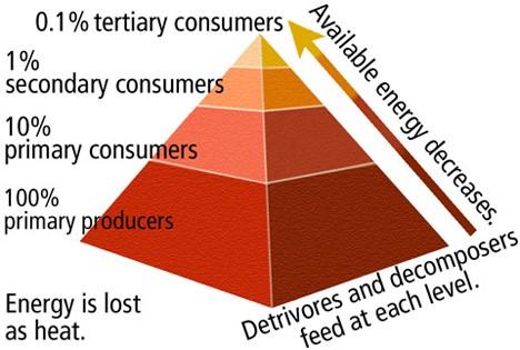 623_Bc10fig26c-food-pyramid-3_tm_lowres