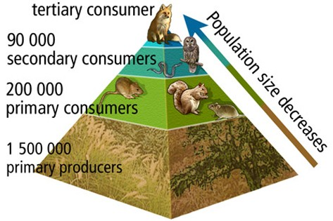 676_Bc10fig26a-food-pyramid_tm_r-lowres