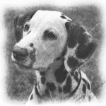 911_Dog-1-Drawing-lowres