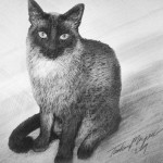 912_Cat-1a-Drawing