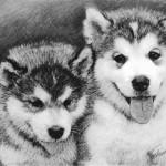 913_Dogs-Husky-2